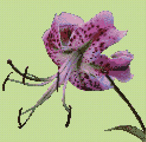 Orchid cross stitch design, Candice Crafts Cross Stitch Shop